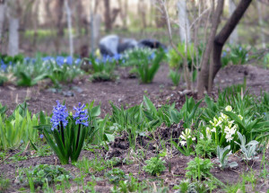 first-spring-flowers-blossoming-in-april-1338397